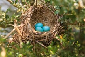 Bird Eggs at the Inn at Warner Hall