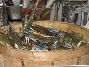 Chesapeake Bay Blue Crabs